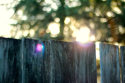 Sunlight over the Fence